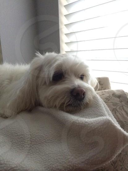 Dog blanket  photo