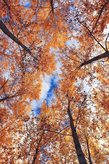 autumn trees during daytime with cloudy sky photo