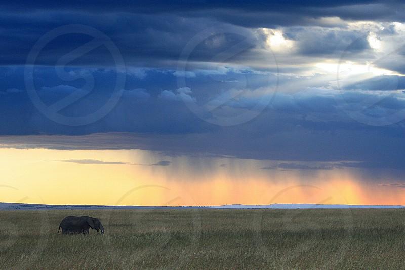 elephant on field photo