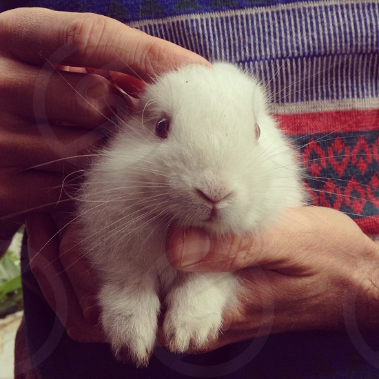 Person holding a white bunny photo