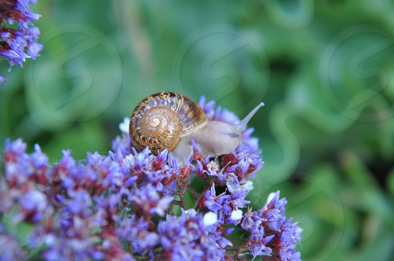 Snail in the morning  photo