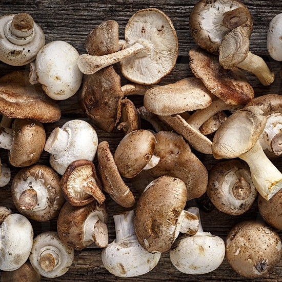 Mushrooms - variety photo
