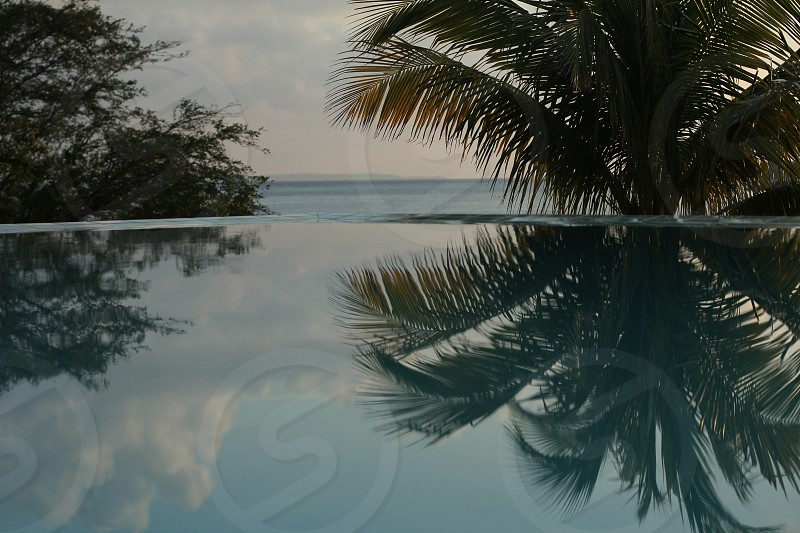 Caribbean dreaming water reflection palms ocean clouds photo