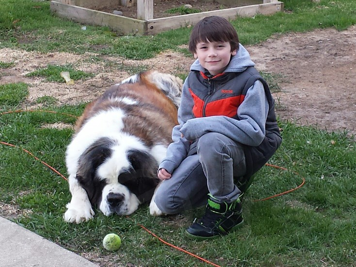 Boy and his Saint Bernard. photo