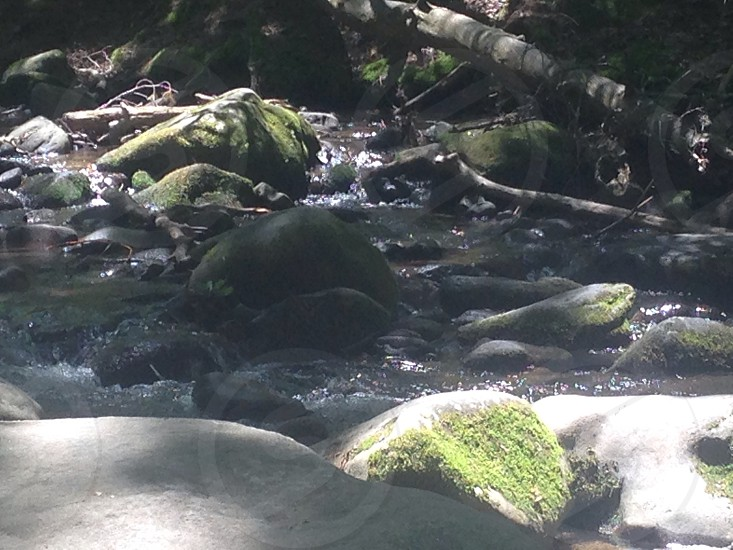 natural running water in the forest photo