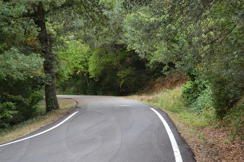 Carretera en el bosque photo