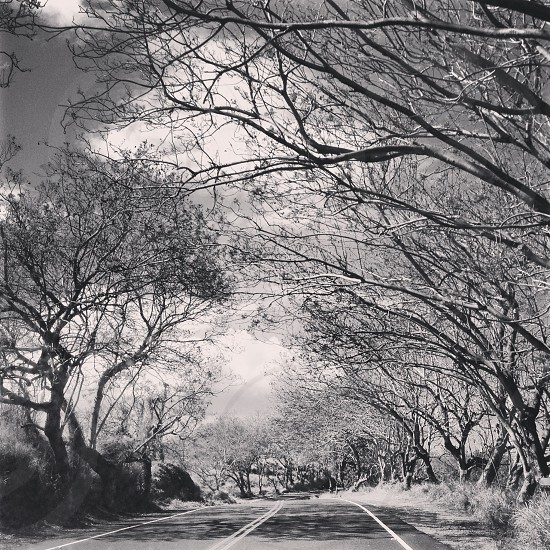 lonely maui road photo
