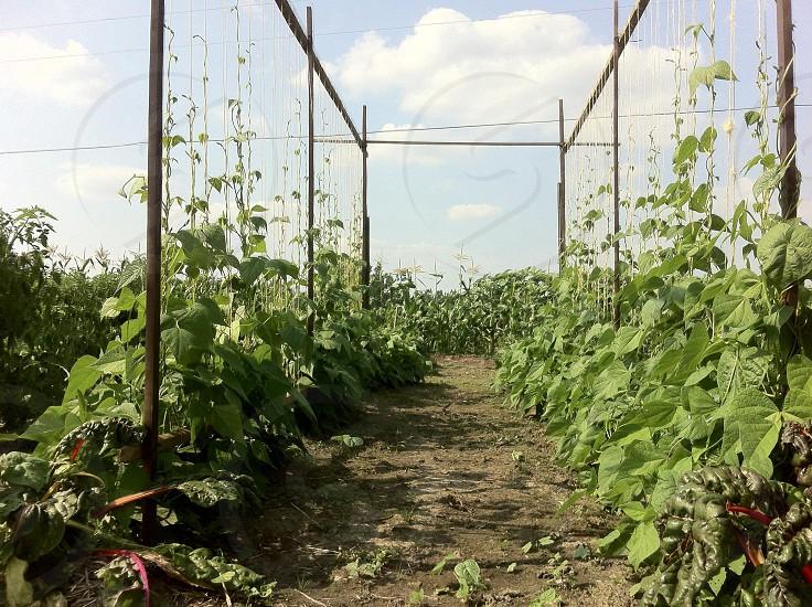 pathway on garden photo