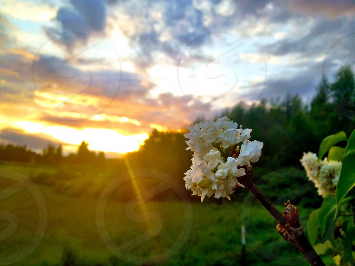 white flower on green field photo
