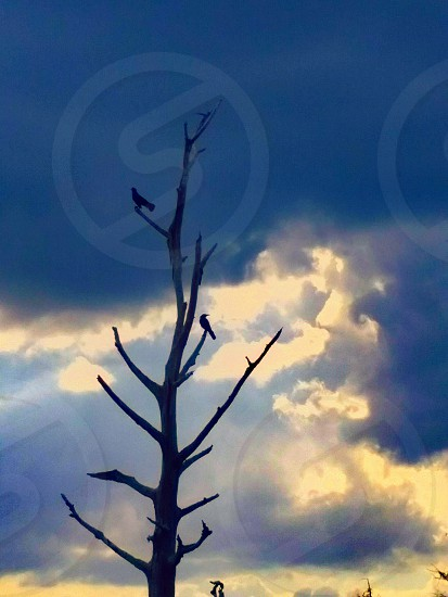 bird on a branch   Birdwatching   Tree and Sky   tree silhouette   birds_n_branches   blue sky   Sky and Clouds   skyandclouds photo