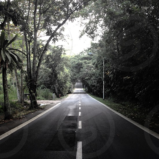 white dotted road line  photo
