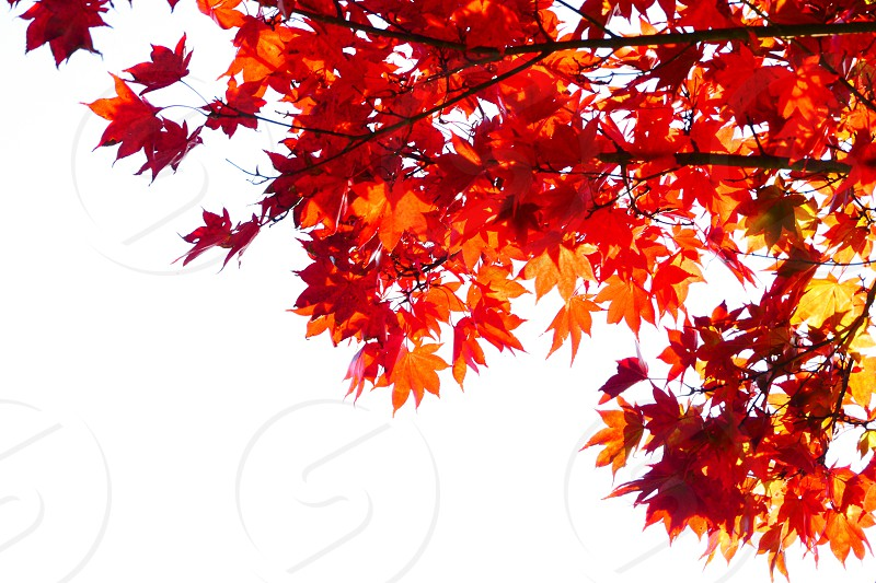 Autumn color leaves warm tree trees  photo