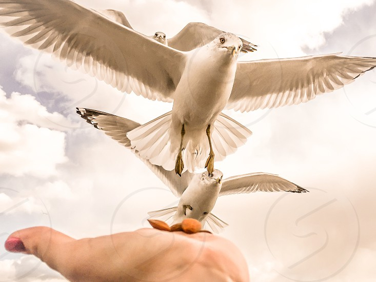 white birds flying towards brown seeds on human palm photo