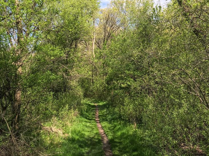 Single track trail thru Spring forest. Sunshine shadows green  photo