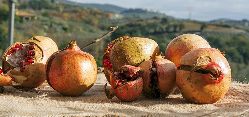 Pomegranate fruits with a countryside background photo