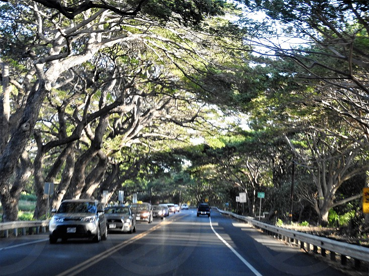 Maui Highway           photo