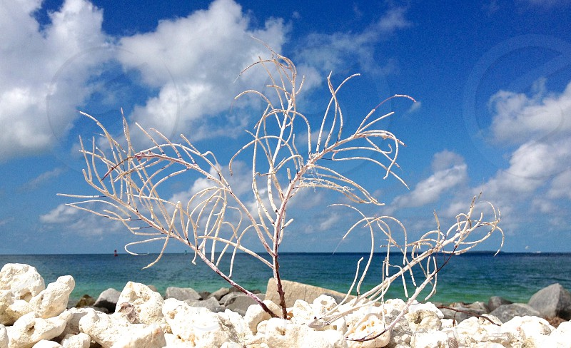 Coral Beach Ocean Water Rocks Sand Keywest Florida Tropical Sky Clouds  photo