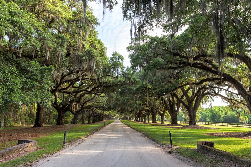The entrance to Boone Hall Plantation in Charleston South Carolina.  Lined with an allele of majestic oak trees with dripping Spanish moss. photo