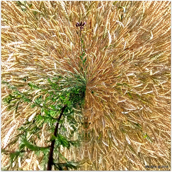 Roundly Corny. photo