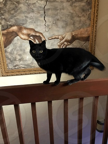 Kitty art classic juxtaposition black black cat funny photo