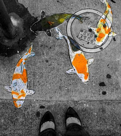 koi fish designed graffiti photo