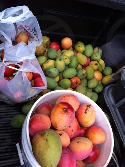 Fruits; mango  photo