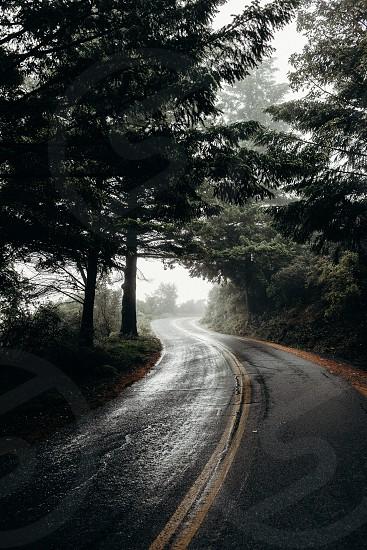 Foggy morning on Mount Tam photo