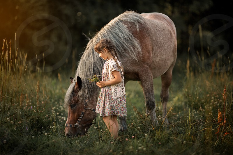 Little girl with horse at summer evening  photo