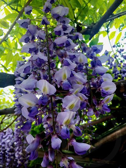 Purple Flower spring outdoor park photo