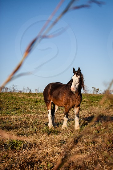 Horse in the pasture. photo