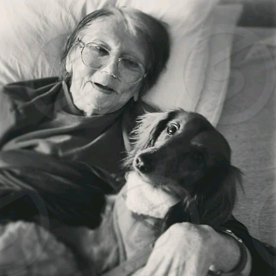 Holly the therapy dog on one of her visits to the nursing home photo