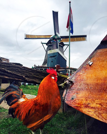 holland Netherlands windmill flag rooster countryside calm travel country trip explore photo