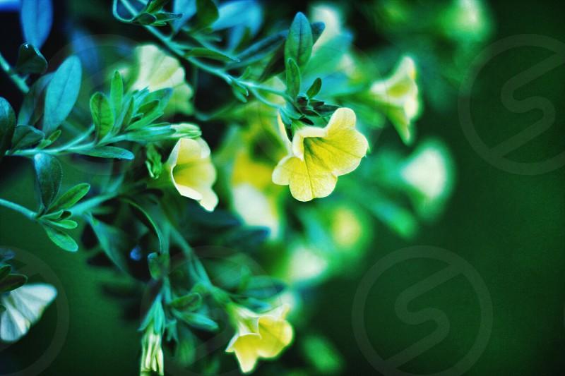 Flowers. photo