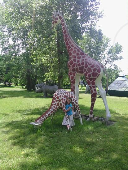 Giraffe hug. photo