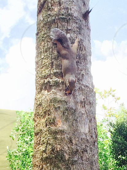 Squirrel snacking on a rice cake photo
