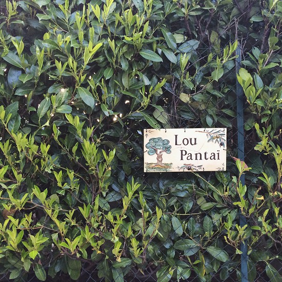 lou pantai plant label photo
