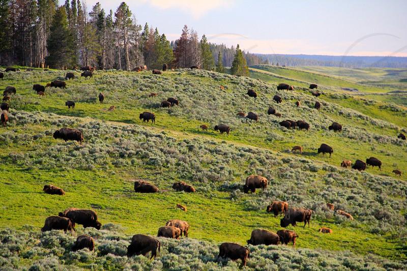 view of green grass field photo