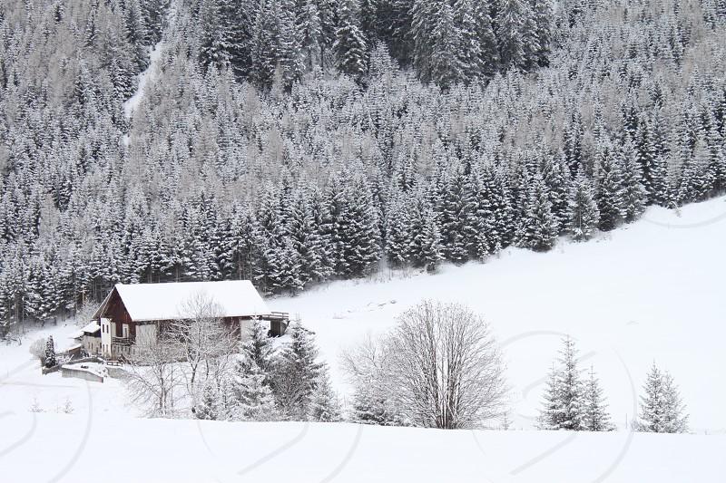 house on snowy pine mountain photo