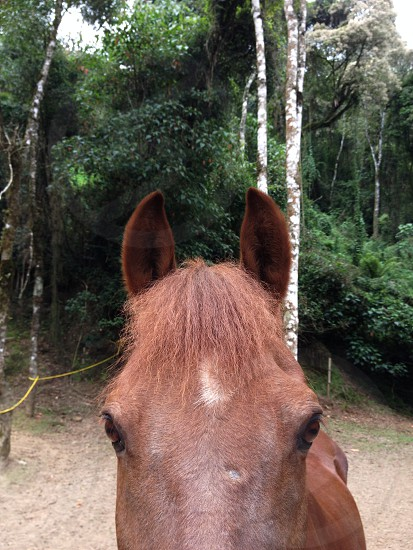 brown horse on the farm photo