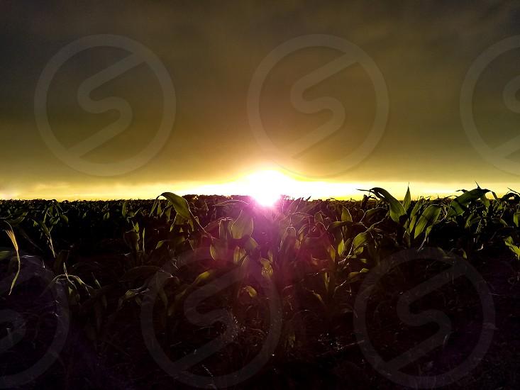 Cornfield Sunset photo