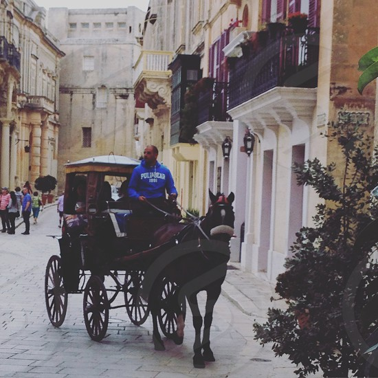 Silent city Malta mdina horse city horse and carriage  photo