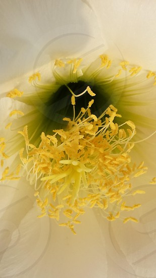 close up photography of yellow pollen flower photo