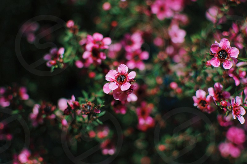 pink flowering plant with green leaves photo