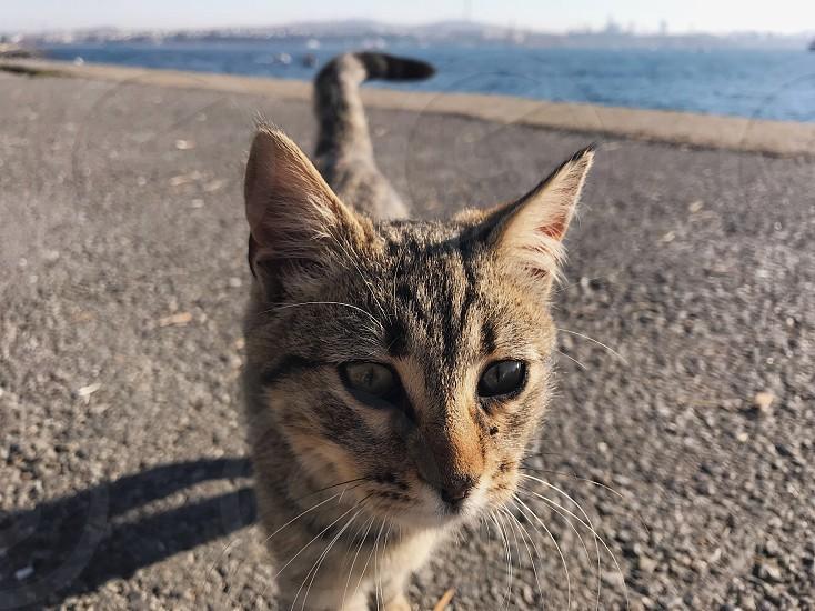 Cat cats sea minimalistic minimal minimalism animal earth travel autumn nature  photo
