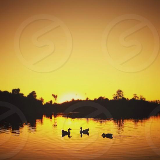 Santa Barbara Bird Refuge photo