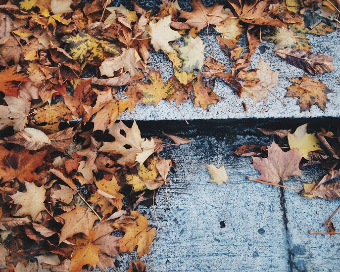 brown maple leaves on gray concrete staircase photo