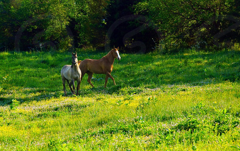 2 horse on green field photo