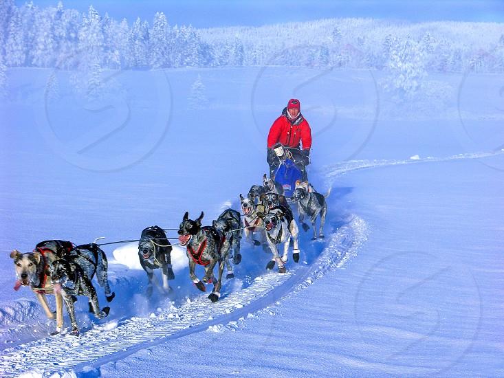 Dogsled Team photo