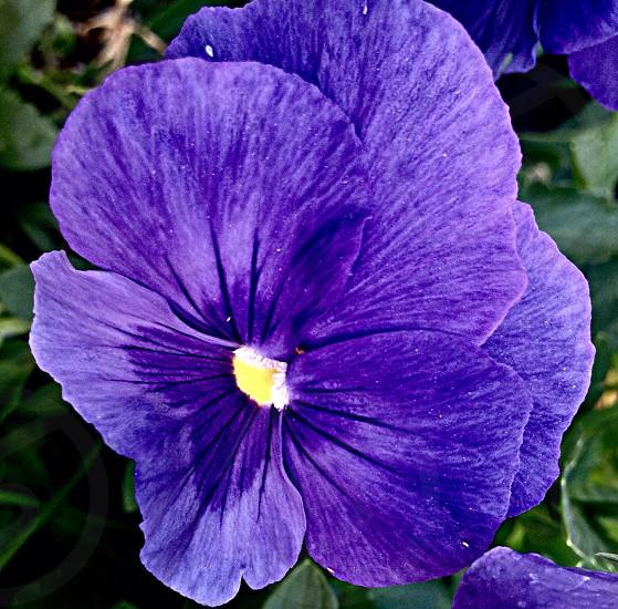 Purplebloomingflowerfresh photo