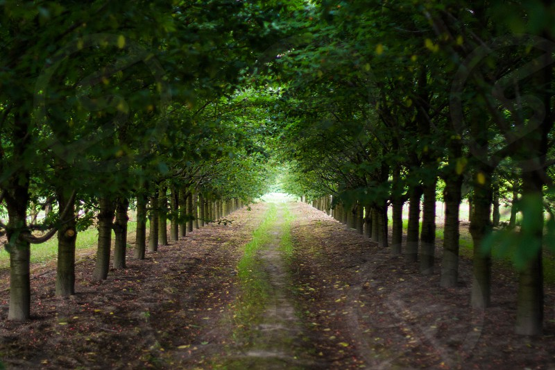 Tunnel of trees photo